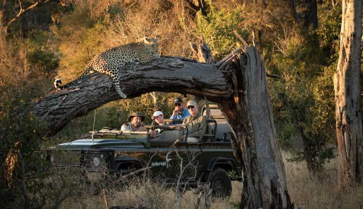 The Ultimate African Safari