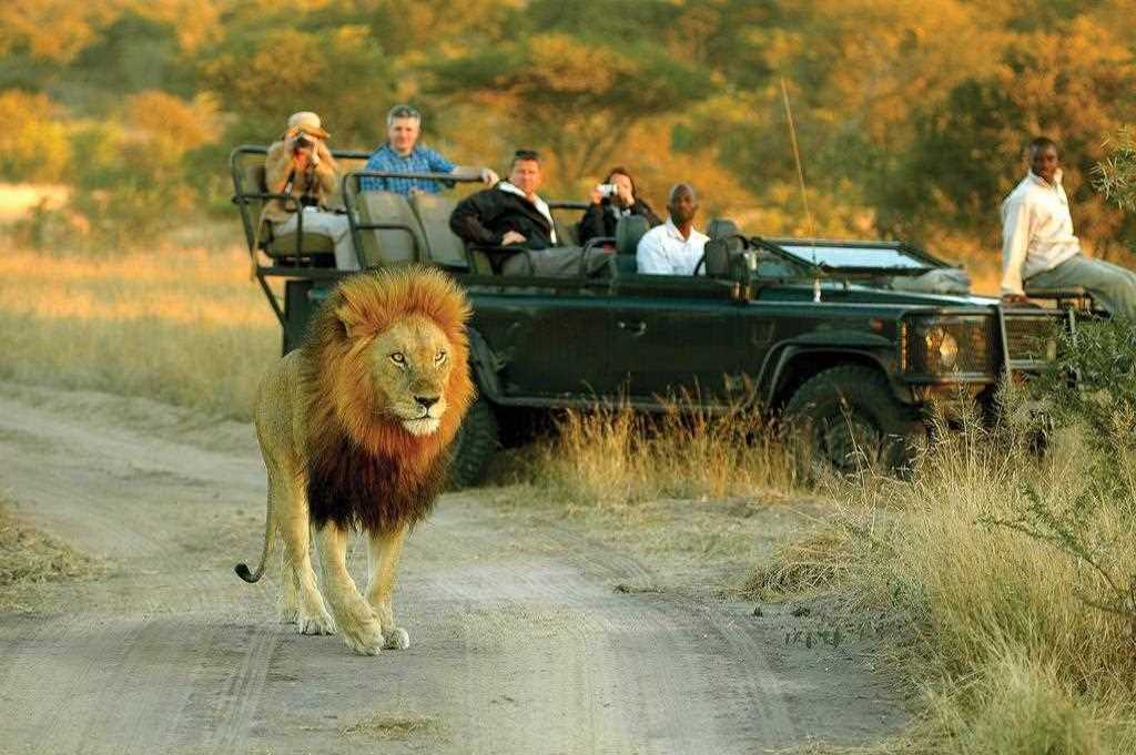 Ultimate South Africa Safari