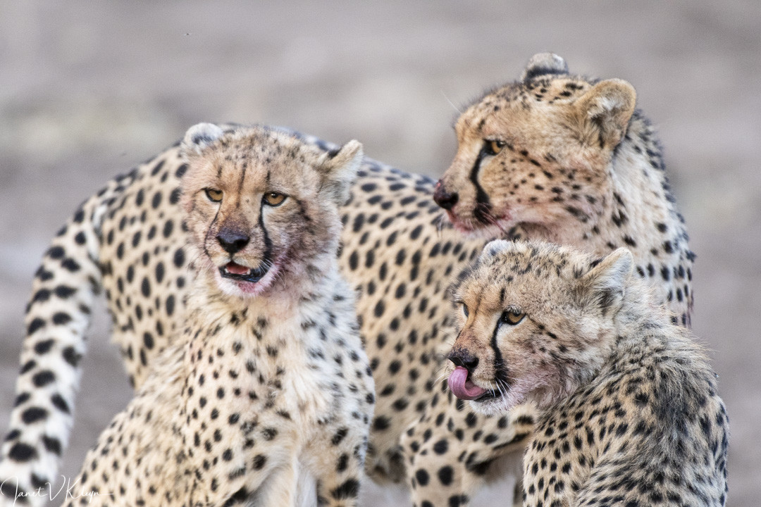 Times of plenty   Taga Safaris
