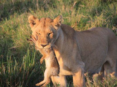 October in the Masai Mara   Taga Safaris