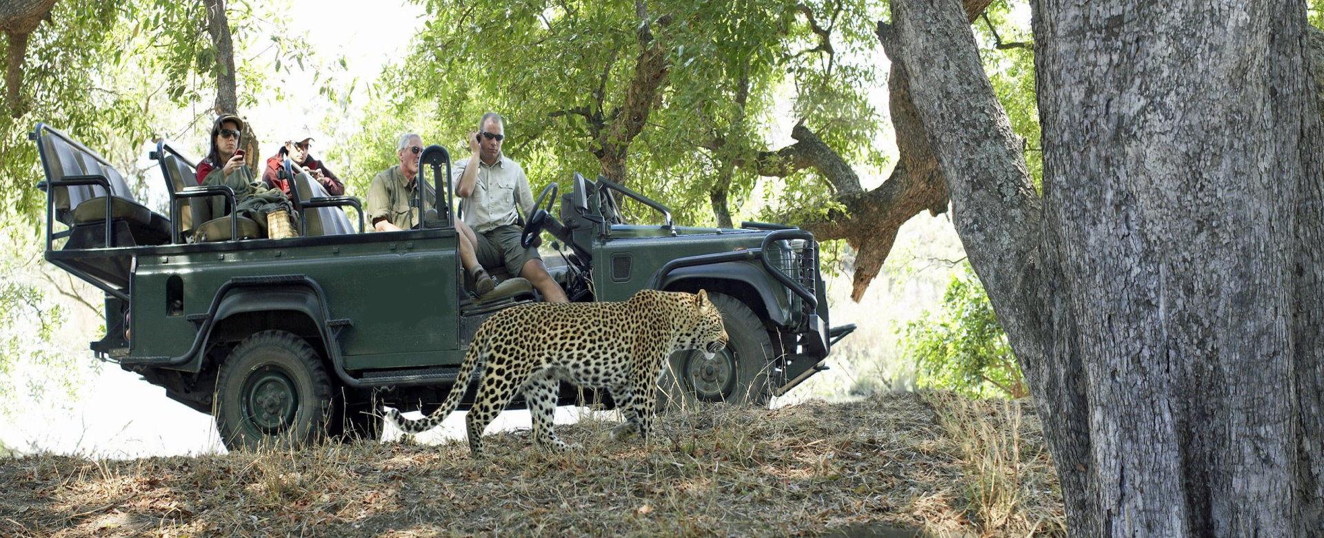 Exclusive Private Safaris - Game Drive