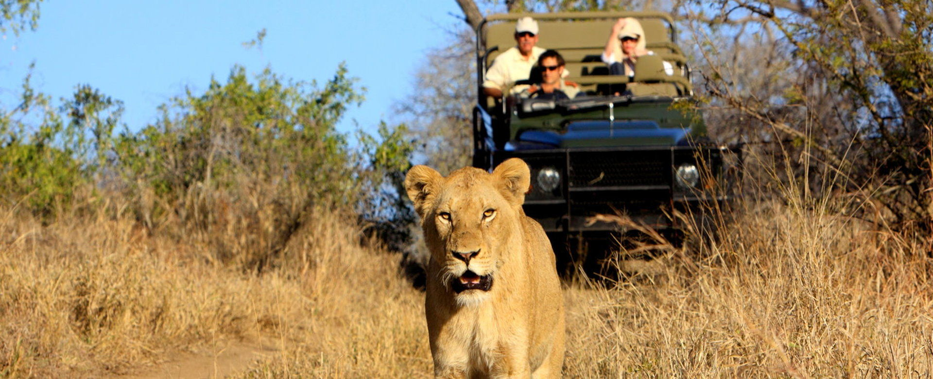 Ultimate Africa - Lion Sighting