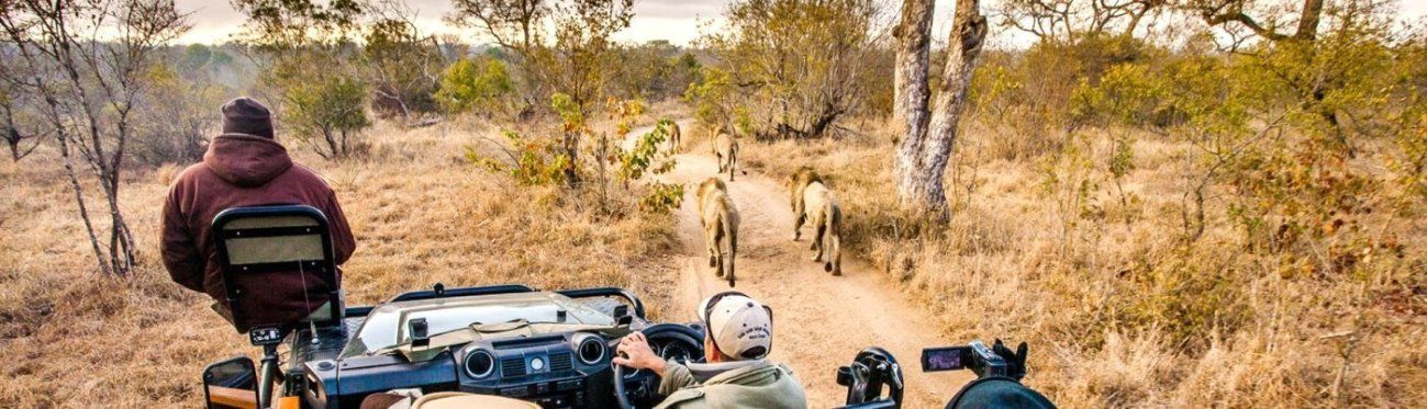 Tailormade Safaris - Game Drive