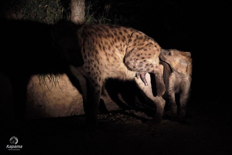 Seeing Spots | Taga Safaris - An African Safari with the Pioneers