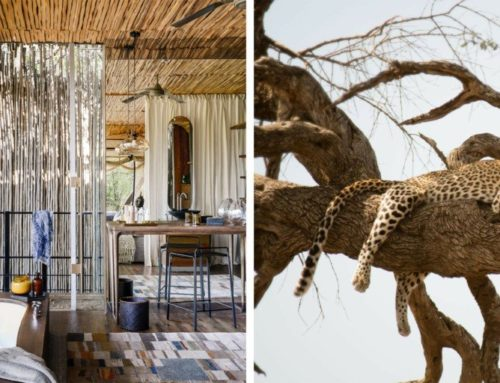 Singita Sweni Lodge Redefines Luxury Bush Experiences