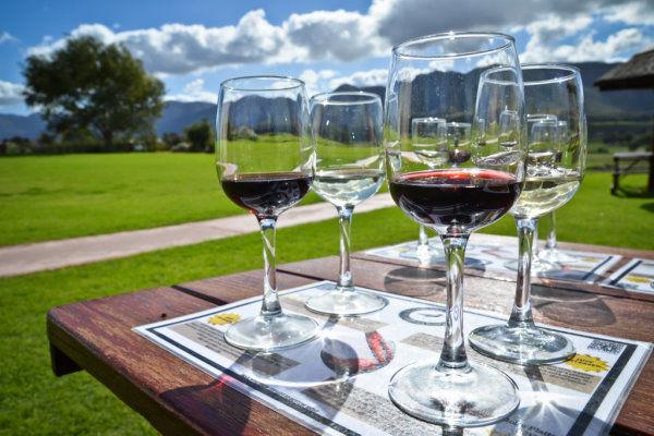 African Safaris Cape Wine Tasting