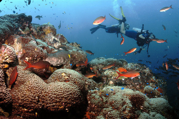 African Safaris Scuba Diving