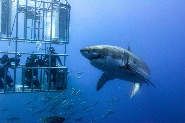 African Safaris Shark Cage Diving