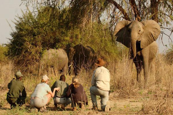 African Safaris Walking Safari