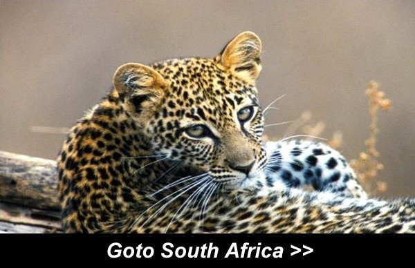 Goto South Africa