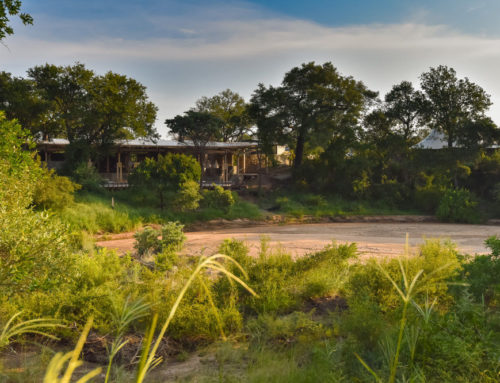2019 Saseka Tented Camp Launch Deals