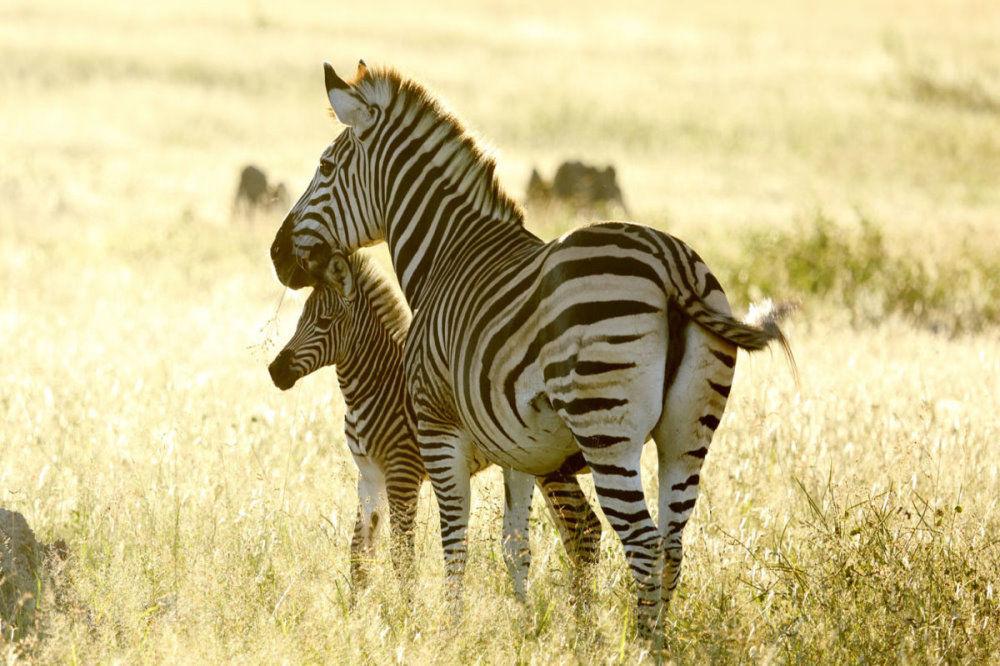 Family Safari Adventure