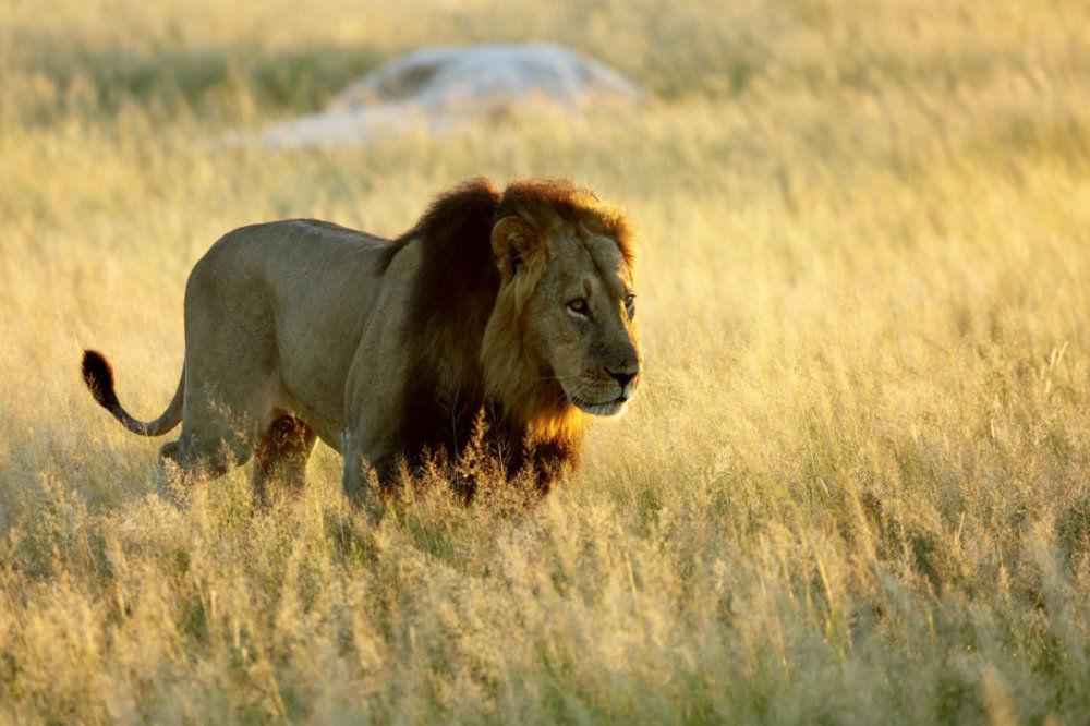 Ride Hwange Horseback Safari