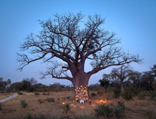 Botswana long stay offer