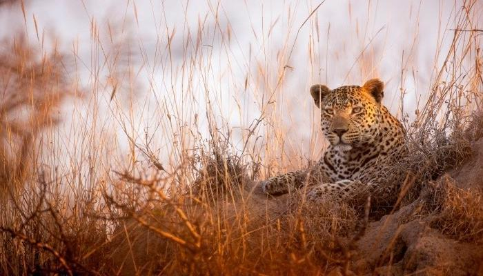 Dulini Collection and Savanna Private Game Reserve Special
