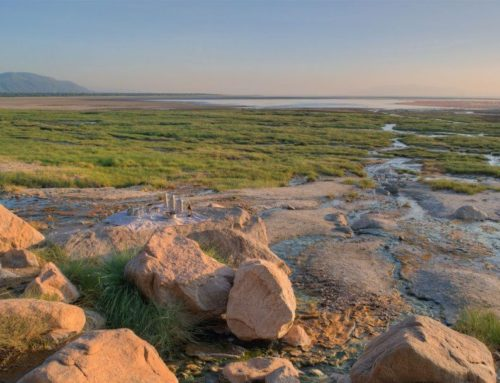 Explore more of Lake Manyara