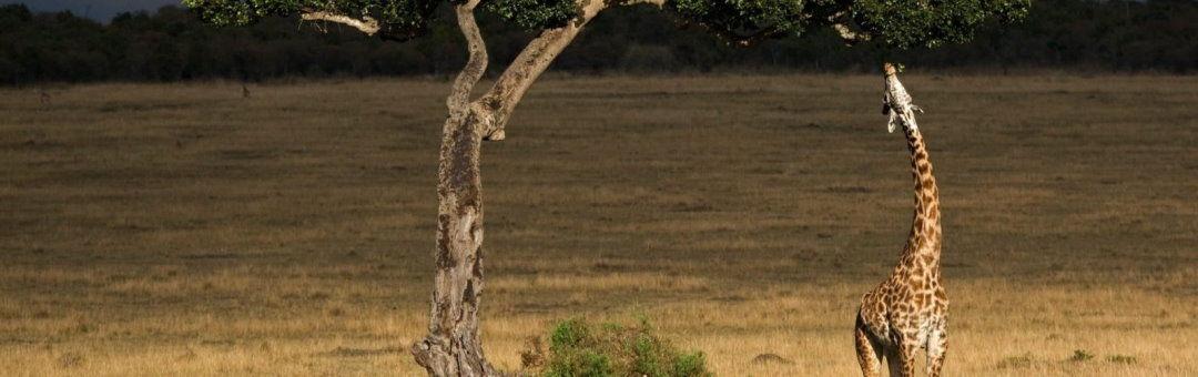 Tanzania long stay offer