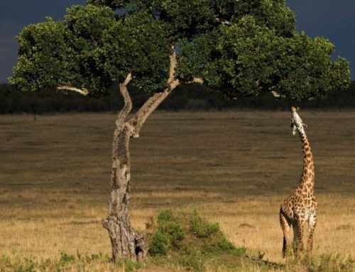Tanzania long stay offer