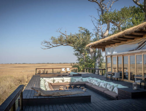 The Magic of Zambia's Busanga Plains
