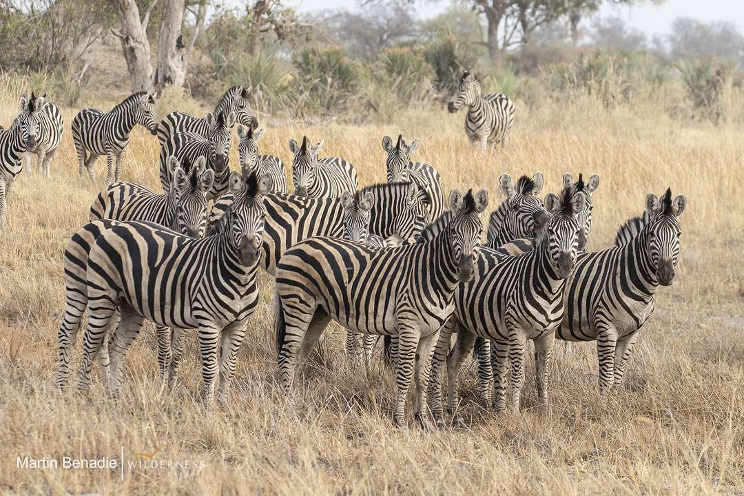 Jao Unfolding Wildlife Drama