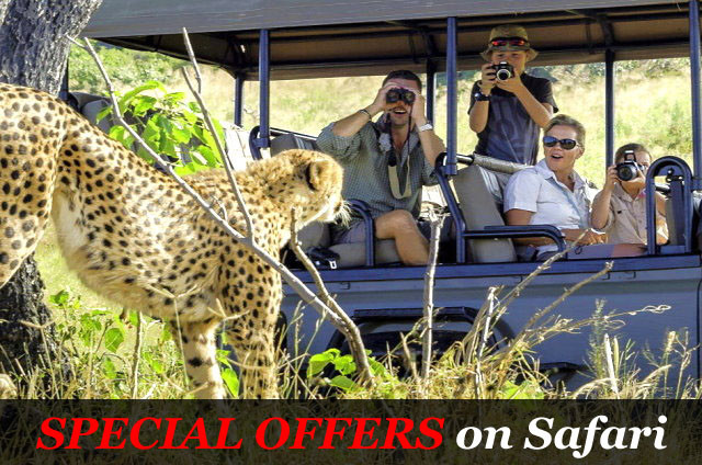 Special Offers on Safari