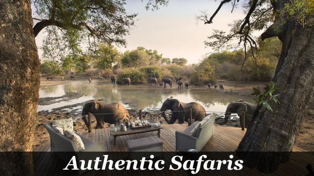 Authentic Safaris