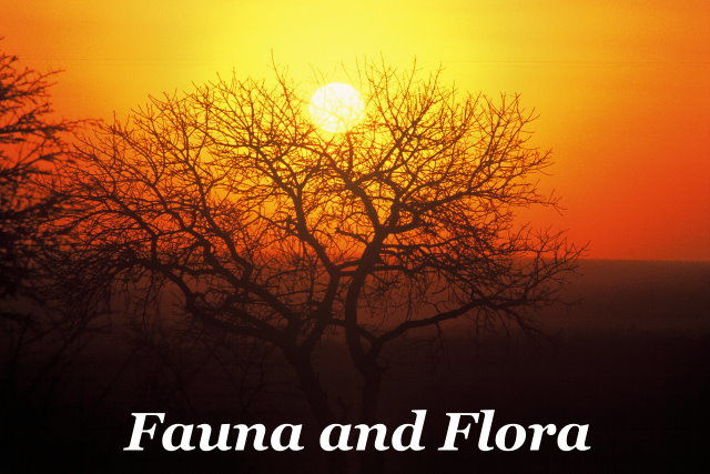 Fauna and Flora Taga Safaris