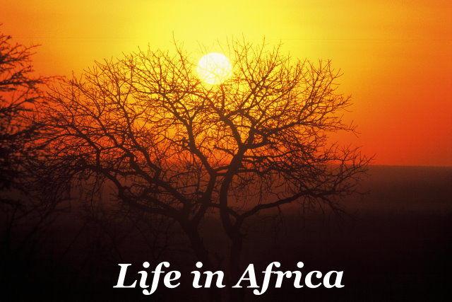 Life in Africa Taga Safaris