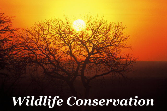 Wildlife Conservation Taga Safaris