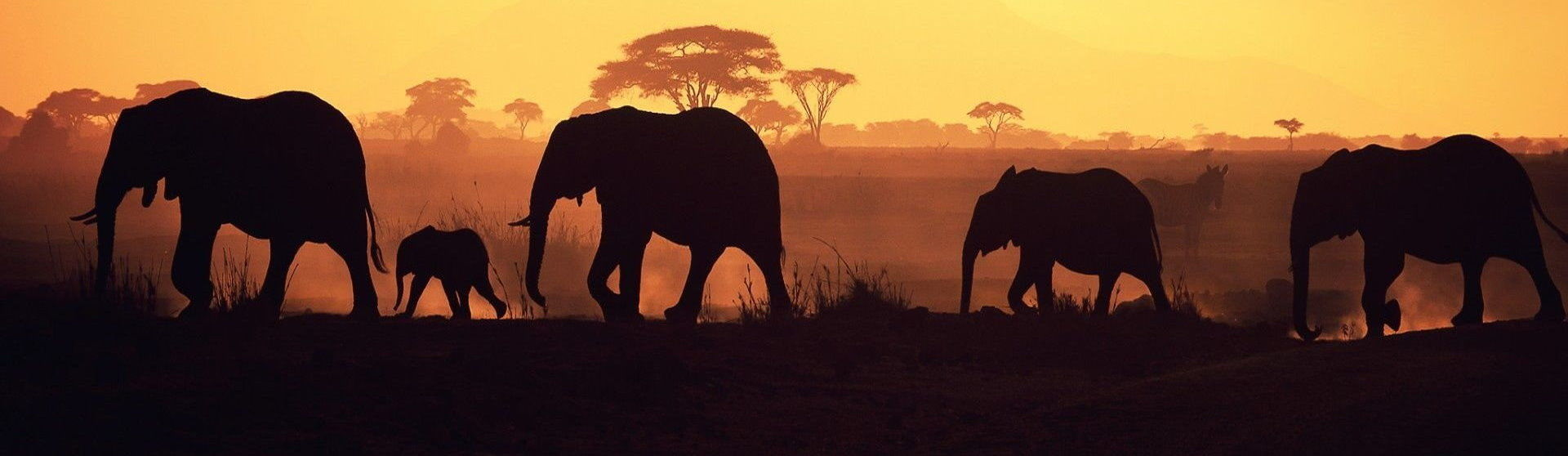 Ultimate Africa Safaris