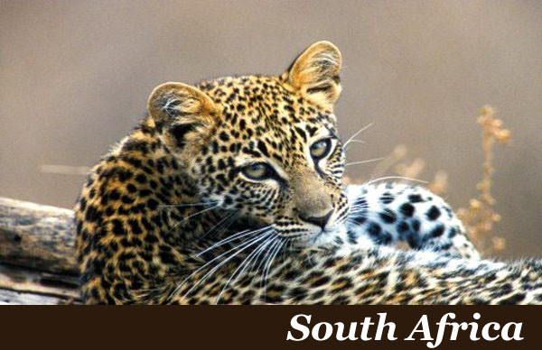 South Africa Safaris with Taga Safaris Africa
