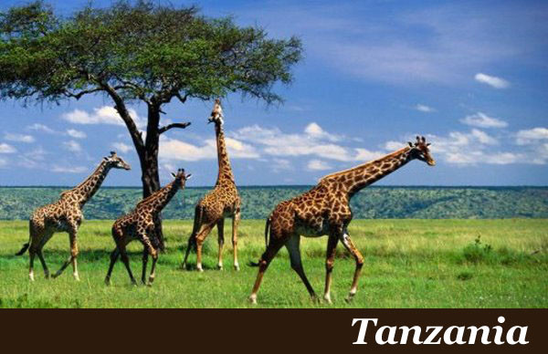 Tanzania Safaris with Taga Safaris Africa