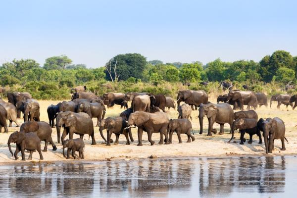 Best of Hwange Safari