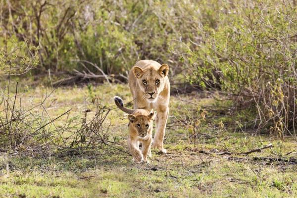 Victoria Falls and Northern Hwange Safari
