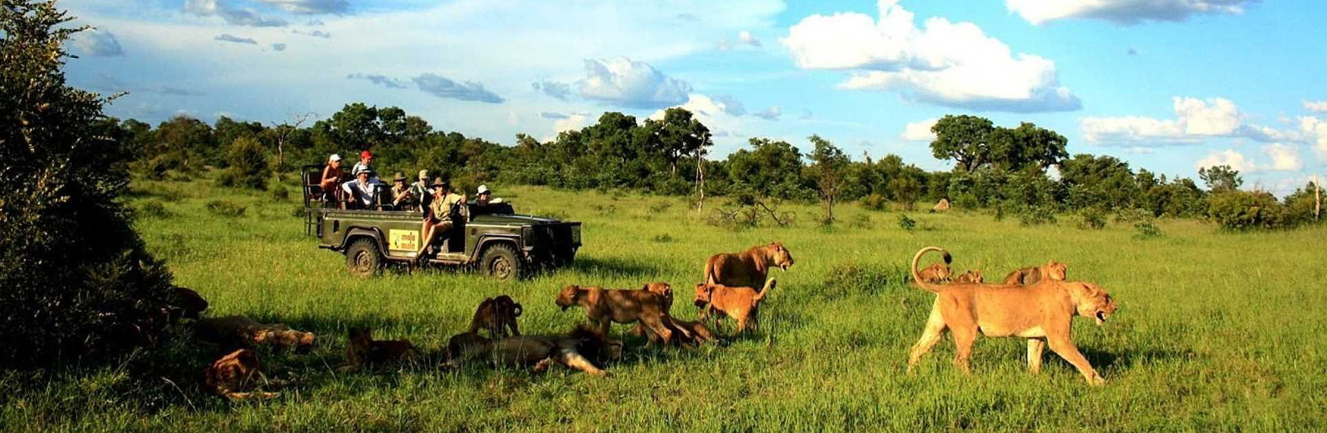 Tailormade Safaris Game Drive